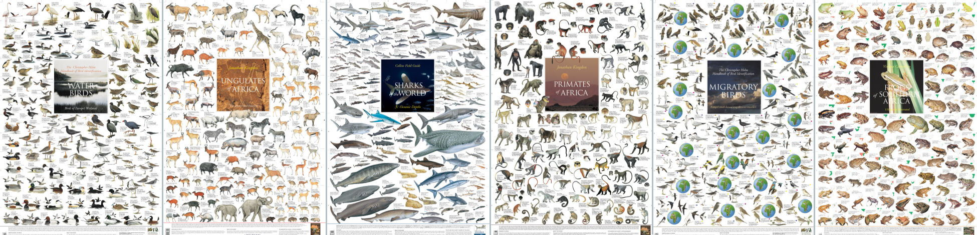Wild Life Posters