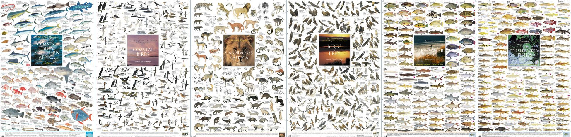 Marine Life Posters