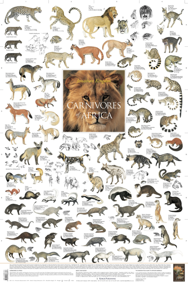 Carnivores of Africa Poster