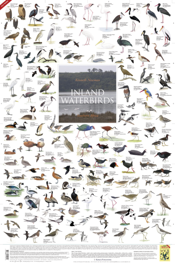Inland Waterbirds - Southern Africa - Poster