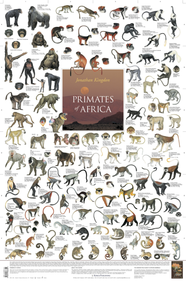 Primates of Africa Poster