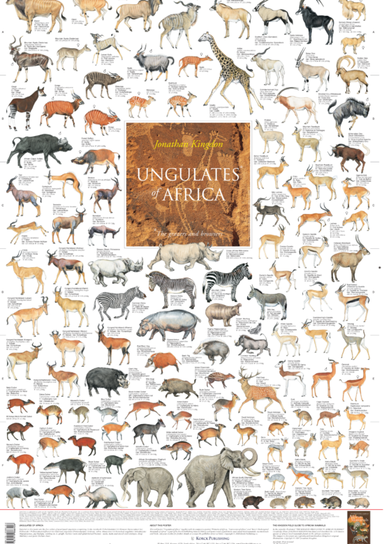 Ungulates of Africa Poster