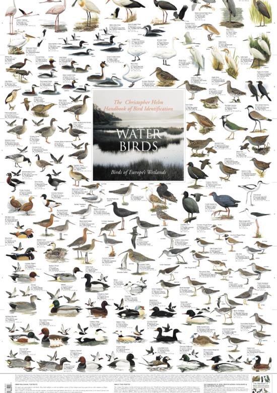 Water Birds of Europes Wetlands