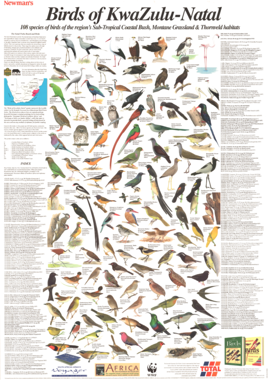 Birds of KwaZulu-Natal Poster