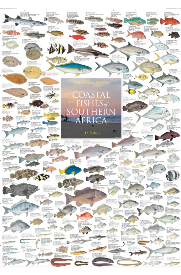 coastal fishes of southern africa inshore poster