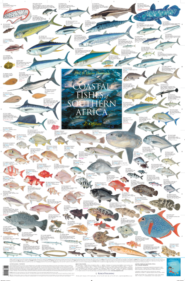 fish posters southern africa