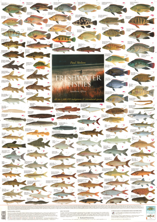 Fresh Water Fish Posters