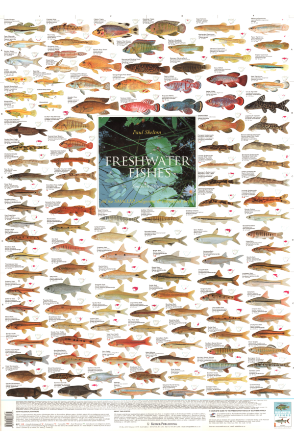 Freshwater Fishes Poster