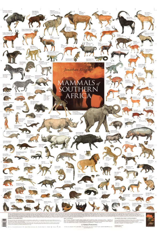 Mammals of Southern Africa Poster