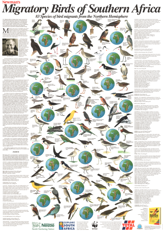 migratory birds of southern africa poster