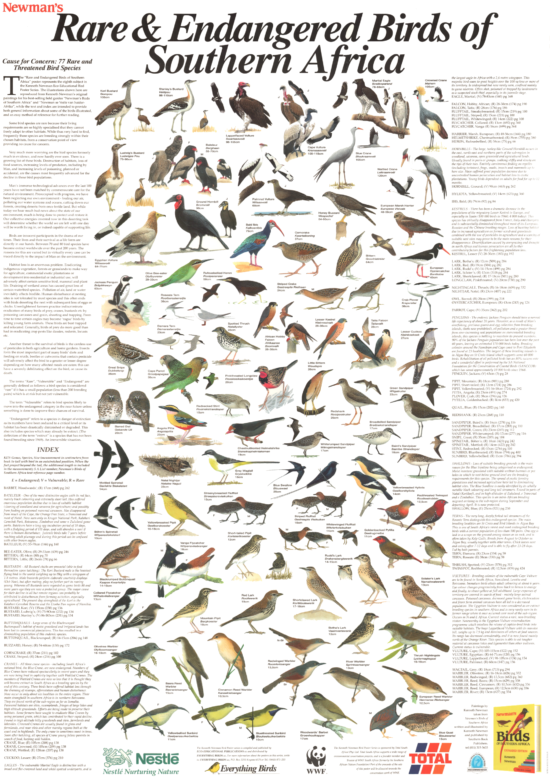 Rare & Endangered Birds of Southern Africa Poster