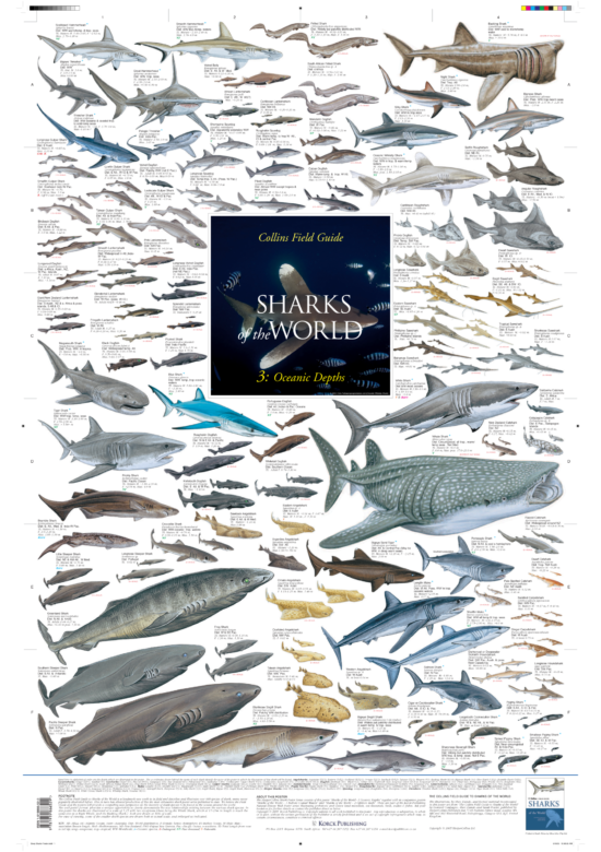 Sharks of the World Poster