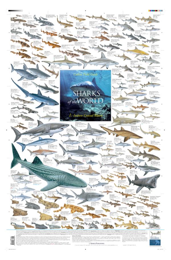 Inshore Shark Poster