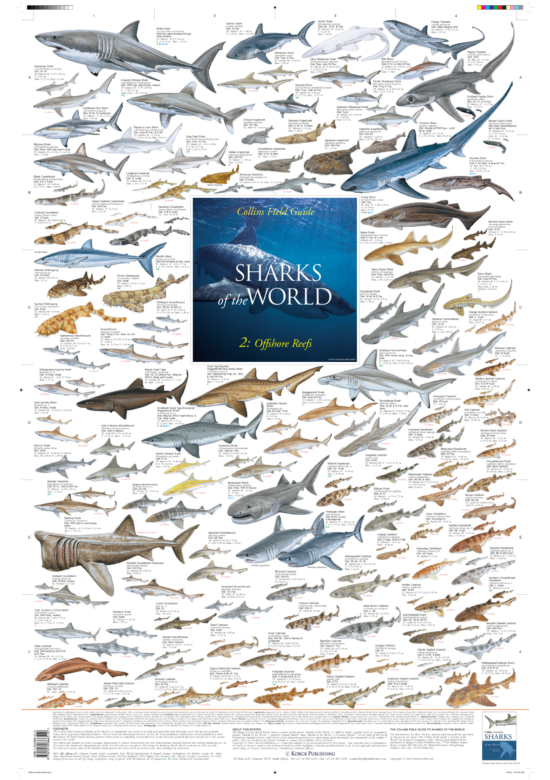 Offshore Shark Species Posters