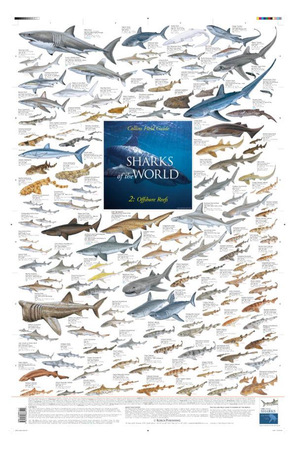 Offshore Shark Species Posters